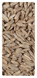 Cumin Seeds Supplier India
